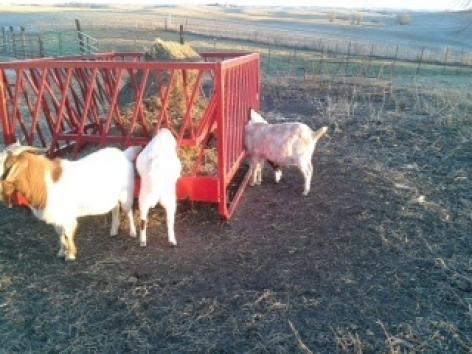 Model 400 Sheep and Goat  Feeder