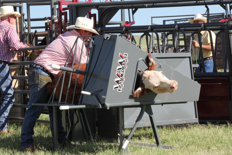 2020 WW Livestock Manual Calf Table Chute