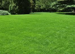 Turbo Grass Seed